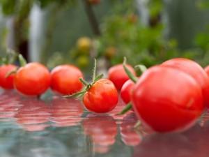 Tomato Party
